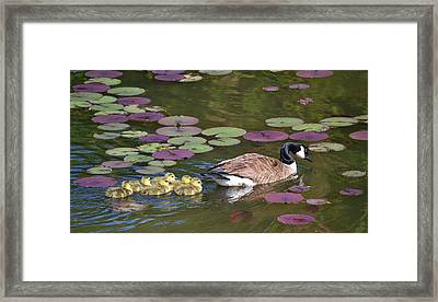 Framed Print featuring the photograph Follow The Goose by Mary Zeman