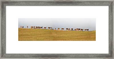 Follow The Herd Framed Print