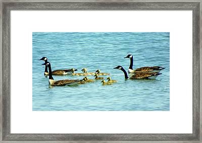 Follow The Leader Framed Print by Karen Wiles