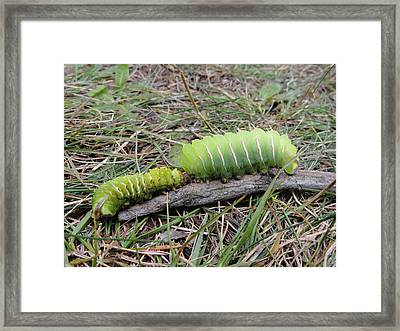 Follow The Leader Framed Print by Sue Duda