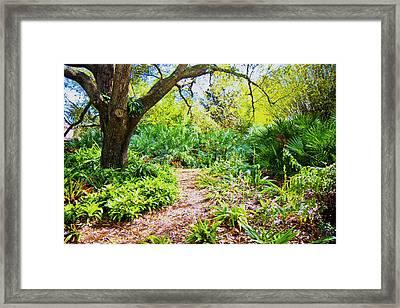 Follow The Path  Framed Print