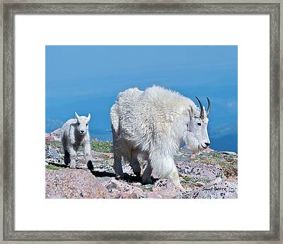 Framed Print featuring the photograph Following Momma by Stephen  Johnson