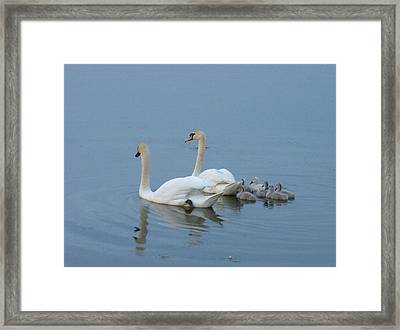 Following Mommy And Daddy Framed Print by Jeanette Oberholtzer