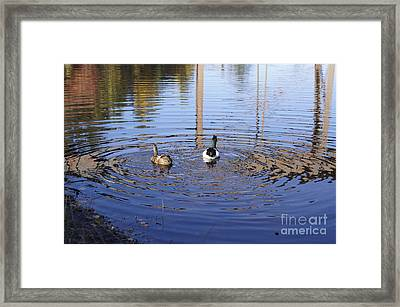 Following Theirs Path By Line Gagne Framed Print by Line Gagne