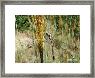 Food Chain Framed Print by Michelle H