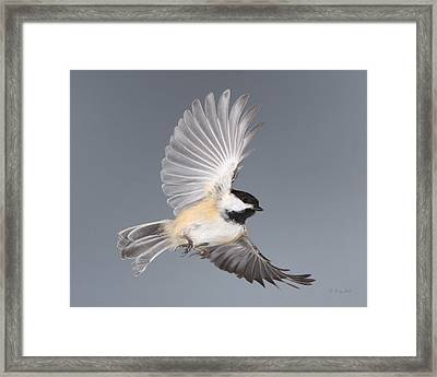 Food For Song Framed Print by Gerry Sibell
