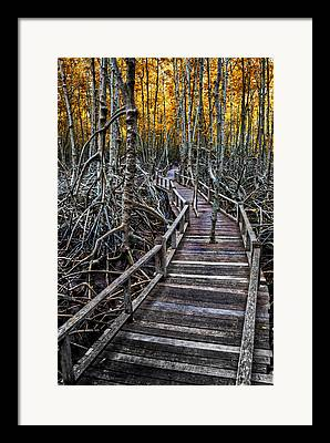 Mangrove Forest Framed Prints