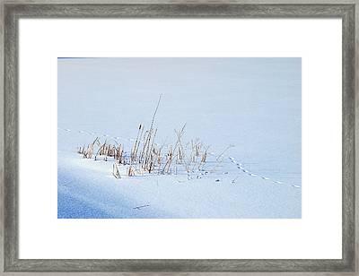 Footprints On Snow Framed Print by Paul Ge