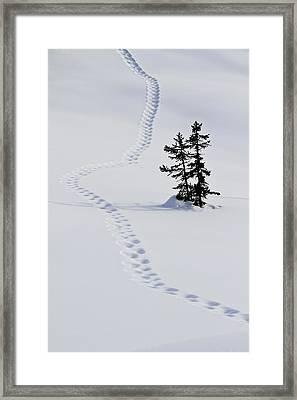 Footstep Trail On Snow Framed Print