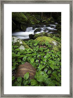 For Eliot Framed Print by Rob Travis