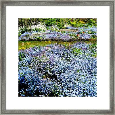 For-get-me-never Framed Print by Shirley Sirois
