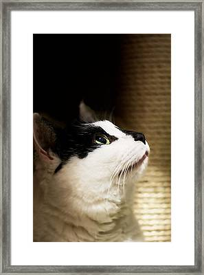 For Me Framed Print by JM Photography