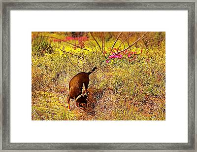 Foraging Framed Print by Brian D Meredith