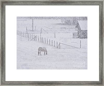 Foraging In The Snow Framed Print