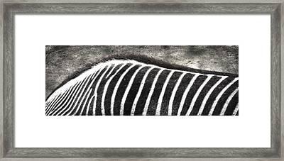 Foraging Spots  Framed Print