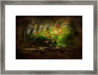 Forbidden Woods Framed Print by Svetlana Sewell