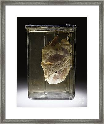 Forensic Evidence, Heart Perforated Framed Print by Science Source