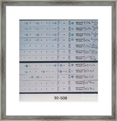 Forensic Evidence, Pcr Dna Tests Framed Print by Science Source