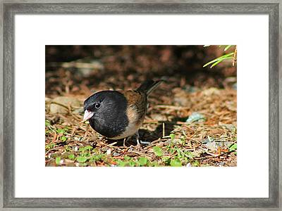 Forest Bird Framed Print by Tyra  OBryant