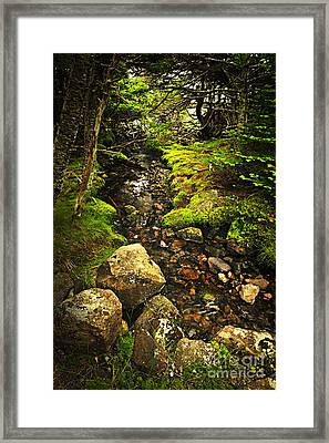 Forest Creek Framed Print by Elena Elisseeva