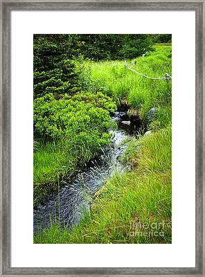 Forest Creek In Newfoundland Framed Print