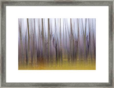 Forest Dream Framed Print by Ng  Hock How