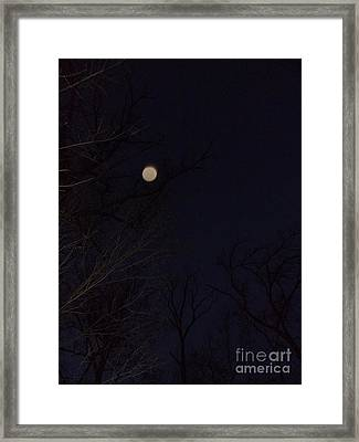 Forest Energy Framed Print by Doug Kean