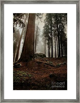 Forest Floor And Fog Framed Print