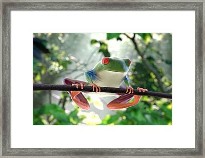 Forest Frog Framed Print by Ilendra Vyas