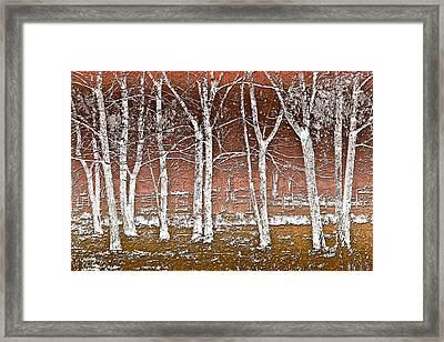 Forest Ghosts Framed Print by Debra and Dave Vanderlaan