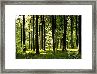 Forest Idyll Framed Print by Renate Knapp