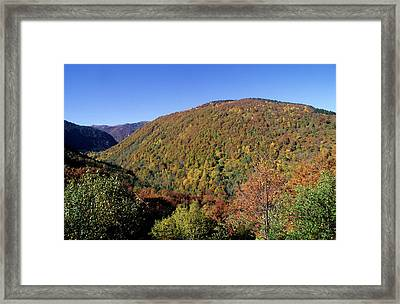 Forest In Autumn Framed Print by P. Eoche