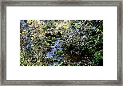 forest in Leon Framed Print by Luis and Paula Lopez
