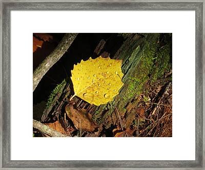 Forest Leaf Framed Print by Pamela Turner