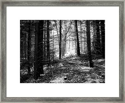 Framed Print featuring the photograph Forest by Lucy D