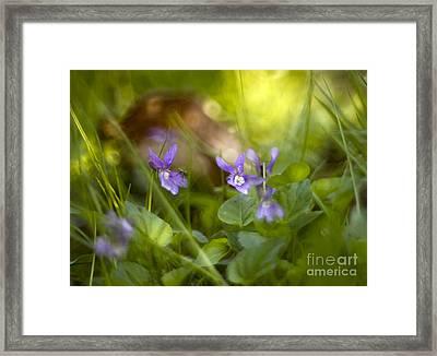 Forest Meadow Framed Print by Angel  Tarantella