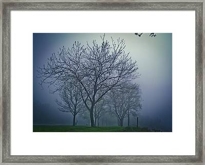 Forest Mist Framed Print by Jason Naudi Photography