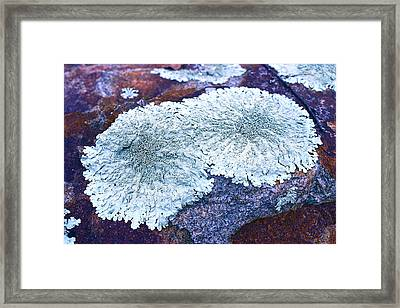 Forest Moss Bouquet Framed Print by Cindy Lee Longhini