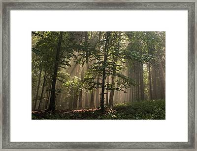 Framed Print featuring the photograph Forest by Odon Czintos
