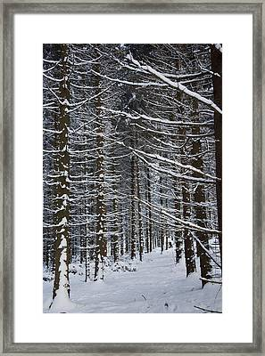 Forest Of Marburg In Winter Framed Print by Axiom Photographic
