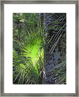 Forest Palm Framed Print by Lou Belcher