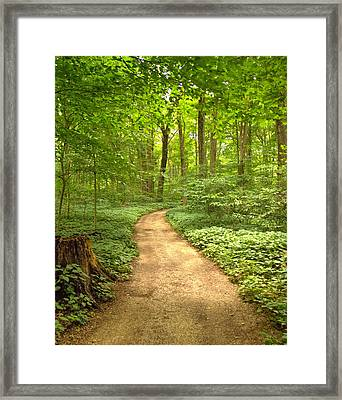 Forest Path Framed Print by Coby Cooper