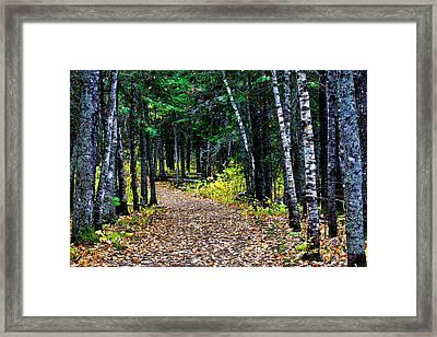 Forest Path In Autumn Framed Print by Matthew Winn