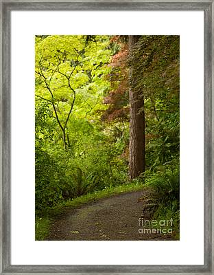 Forest Path Framed Print by Mike Reid