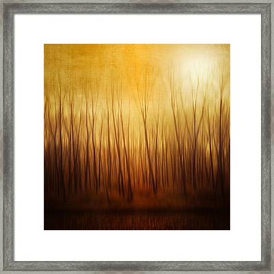 Forest Framed Print by Philippe Sainte-Laudy Photography