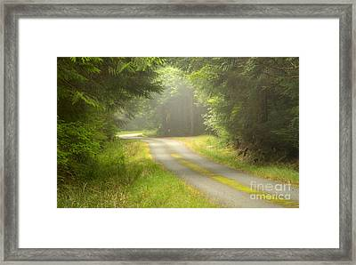 Forest Portal Framed Print by Idaho Scenic Images Linda Lantzy