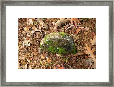 Forest Ranch Cemetery Framed Print