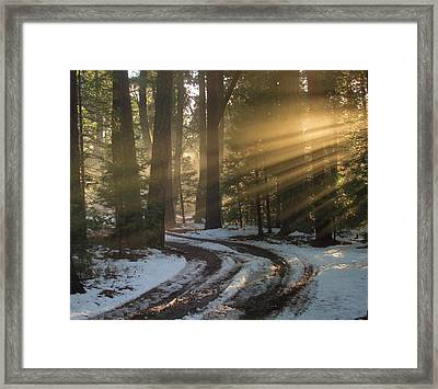 Forest Road Framed Print by Irina Hays