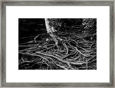 Root Detail Framed Print
