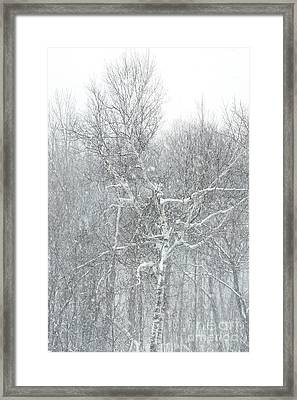 Forest Snowstorm II Framed Print